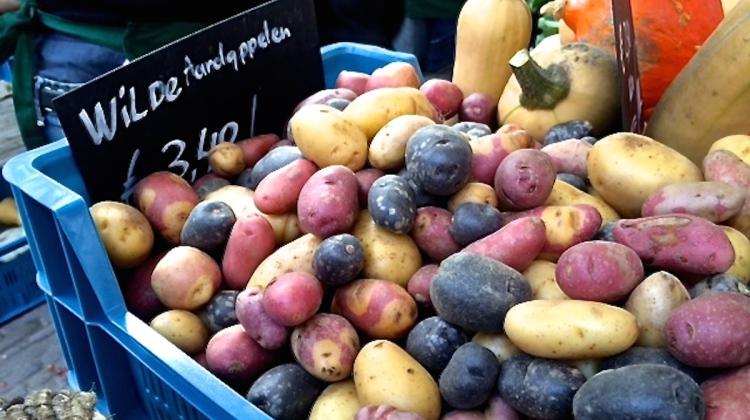 Wild potatoes
